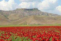 كوردستان