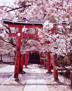 Sensō-ji, Tokyo - Japan - 15 Truly Astounding Places To Visit In Japan. Cherry Blossom Japan, Cherry Blossom Season, Japanese Cherry Blossoms, Aesthetic Japan, Japanese Aesthetic, Kyoto Itinerary, Japon Tokyo, Beau Site, Japon Illustration