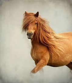 The Cindy Crawford of horses! via Our Beautiful World & Universe by neva