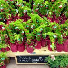 Trader Joe's Grump Tree $7.99 WC/ $8.99 EC MW SE TX | #TraderJoes #GrumpTree #トレーダージョーズ #クリスマスツリー
