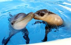 adorable baby dolphin and seal are friends
