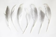 white and grey feathers Blue Feather, White Feathers, White Magic Spells, Things Organized Neatly, Textile Texture, White Chic, Nature Collection, Textile Patterns, Textiles