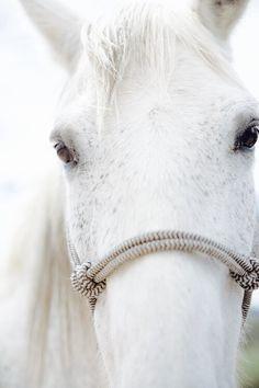 Imagem de horse, animal, and beautiful