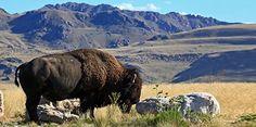 Salt Lake City Hikes - Hiking in Salt Lake City | Visit Utah
