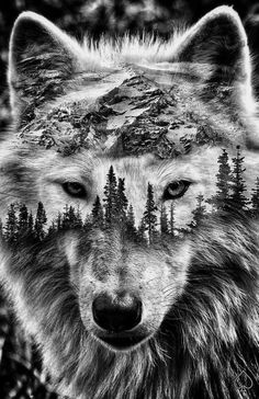 Wolf Photos, Wolf Pictures, Wolf Tattoos For Women, Tattoos For Guys, Wolf Tattoo Sleeve, Sleeve Tattoos, Tattoo Wolf, Image Svg, Jungle Tattoo