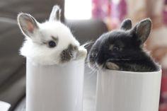 Care for a mug of bun? - May 22, 2012