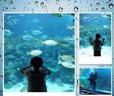 Aquaria KLCC Kuala Lumpur , Aquaria KLCC , Aquaria KLCC Kuala Lumpur - Cuti-cuti Malaysia 2014