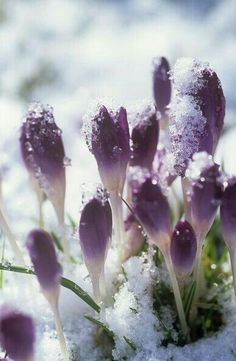 Sometimes it snows in April ~ Prince  #PrinceGoneTooSoon #RIPPrince