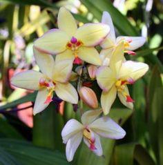 orchidée Photo gratuit