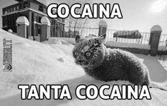 Gatto e coca