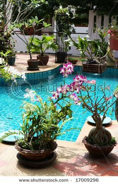 pool and tropical plant garden courtyard