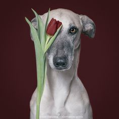 A flower for you! - Bitteschön. All my pictures here can be licensed or bought as prints. Just sent me a message via info@elkevogelsang.com