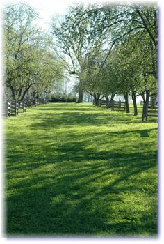 Ironstone Ranch, apple orchard for ceremony
