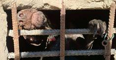 Salven a los perros de los zulos mugrientos de San Roque