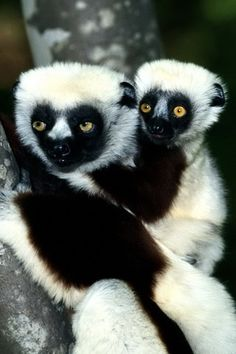 """Hands up if the first thing that went through ur mind was """"zaboomafoo!!"""" ☝"""