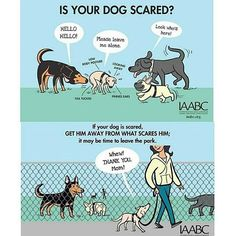 There are a lot more calming signals that dogs give, but here are some of them. Remember a wagging tail doesn't always mean 'I'm friendly'. Always ask the dogs owner if you can pat it before reaching out. A tail between its legs nearly always means fear, yawning can be the dog actually trying to calm you down if it senses that you are anxious, and having a good shake all over can be the dog trying to 'shake' off its anxiety. Of course these things aren't always correct, a dog could shake to…