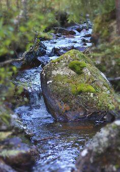 Wat een heerlijke foto.....ik zou wel op zo'n rotsblok willen zitten voor een tijdje.