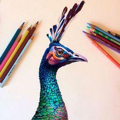 dibujos coloreados a lápiz de Morgan Davidson