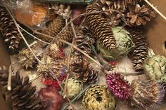 Pine Cones, Dried Veggies, and Dried Flowers for Making Wreaths.