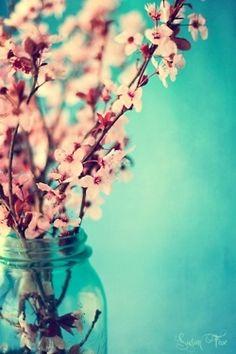 Sakura blossoms.