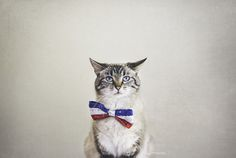 Lynx Point Siamese Personality and Character