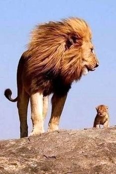 ●•●•●•●•●•● Animals ●•●•●•●•●•● This reminds me of the lion king