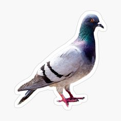 'Pigeon funny design' Sticker by Juaco Framed Prints, Canvas Prints, Art Prints, Pigeon Funny, Funny Design, Glossier Stickers, Cotton Tote Bags, Floor Pillows, Duvet Covers