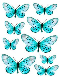 Furniture decals shabby chic french image transfer vintage blue butterfly bugs Craft label script art crafts scrapbooking card making diy Bug Crafts, Home Crafts, Arts And Crafts, Paper Crafts, Blue Butterfly, Butterfly Wings, French Images, Beautiful Butterflies, Diy Art