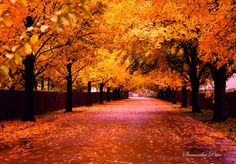 Fall Photography in Oklahoma