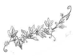 Image result for drawing ivy vines