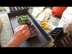 Gary Pilarchik: For New Gardeners: How to Start/Plant Pepper Seeds Indoors for Transplants - MFG 2014 - All For Gardening Garden Seeds, Planting Seeds, Growing Jalapenos, Container Gardening Vegetables, Vegetable Garden, Self Watering Containers, Pepper Seeds, Hobby Farms