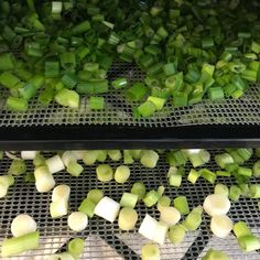 How to Dehydrate Green Onions or Scallions - Food Storage Moms Harvest Onions, Dehydrator Recipes, Dehydrated Food, Preserving Food, Green Onions, Food Storage, Food Hacks, Preserves, Garlic