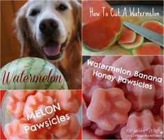 Watermelon: Sugar The Golden Retriever