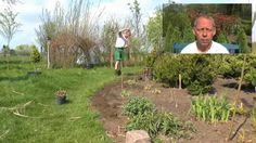 s sskartoffeln erfolgreich im garten anbauen pflanzen vermehrung pinterest garten. Black Bedroom Furniture Sets. Home Design Ideas