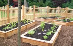 vegetable garden layout | this garden was designed as a family project the owner wanted a garden ...