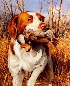 That's My Dog Brittany Spaniel-Quail - Jim Killen Wildlife Paintings, Dog Paintings, Wildlife Art, Hunting Art, Hunting Dogs, Grouse Hunting, Quail Hunting, Brittany Spaniel Dogs, Dog Artwork
