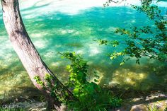 Discover the world through photos. Aquarium, Community, River, World, Fish Stand, The World, Aquarius, Fish Tank, Rivers