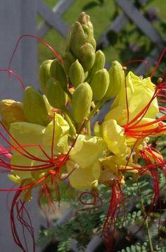 Exotische bloemen...