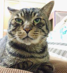 夜ムサシ前脚に抜けヒゲ立てたら何すかコレ の顔What's this? #musashi #mck #cat #キジトラ #ムサシさん by _daisy