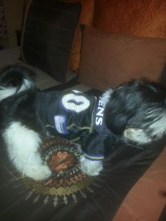Cody and his Raven's jersey!