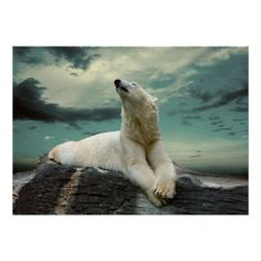 White Polar Bear - The Majestic Hunter