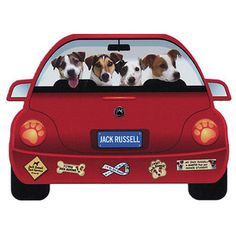 Red Car pet Jack Russell