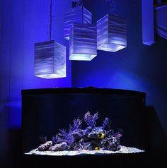 Matt Pedersen's 92 Gallon Caribbean / Florida Reef Aquarium, rebuilt after disaster!