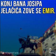 Mahmud-bega Bašić iz Bihaća poklonio je konja Jelačiću koji je dojahao na njemu na ustoličenje u Zagreb, a kasnije i u Mađarsku. Poslužio je Antonu Dominiku Fernkornu kao model za kip 1866. godine. Uginuo je deset godina nakon banove smrti. #ZagrebFacts #Zagreb #ZG #Agram #StariZagreb #TrgBanaJelacica