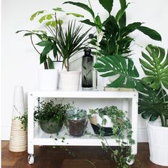 Green on white all kinds of yes!  #indoorjungle#indoorplants#plants#lifestyle#homedecor#happiness#passion#greenthumb#health#plantlife#plantsarefriends#inspo#interior#instagardening#shelfie#peacelily#potplant#monstera#splitleafphilodendron#philodendron#ivy#interiordesign#interiorstyling#succulent#succulove#succulents#succulentlove#SucculentObsessed#plantstyling  via Pinterest by indoorjungle