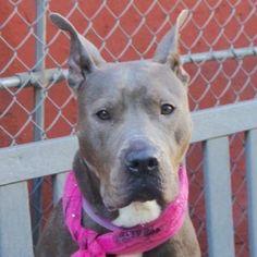 Urgent Pets on Death Row, Inc
