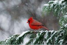 Cardinal!!!