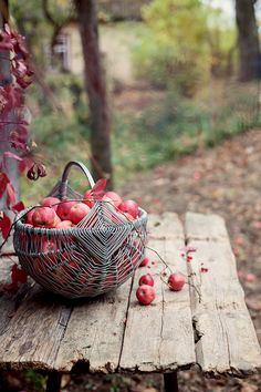 best Ideas for gifts photography pictures Apple Tree, Red Apple, Autumn Day, Autumn Leaves, Winter, Autumn Aesthetic, Fall Harvest, Apple Harvest, Autumn Inspiration
