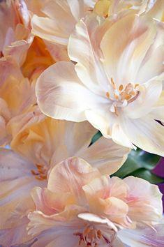 Justin Vo love flowers – Best Home Plants Flowers Nature, Beautiful Flowers, Diy Flowers, Deco Floral, Flower Aesthetic, Flower Photos, Watercolor Flowers, Flower Art, Planting Flowers