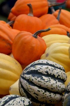 Courges d'automne du Québec #autumnsquash #squash #fall #courge Pumpkin, Vegetables, Nature, Food, Gourds, Fall Season, Pumpkins, Meal, Veggies